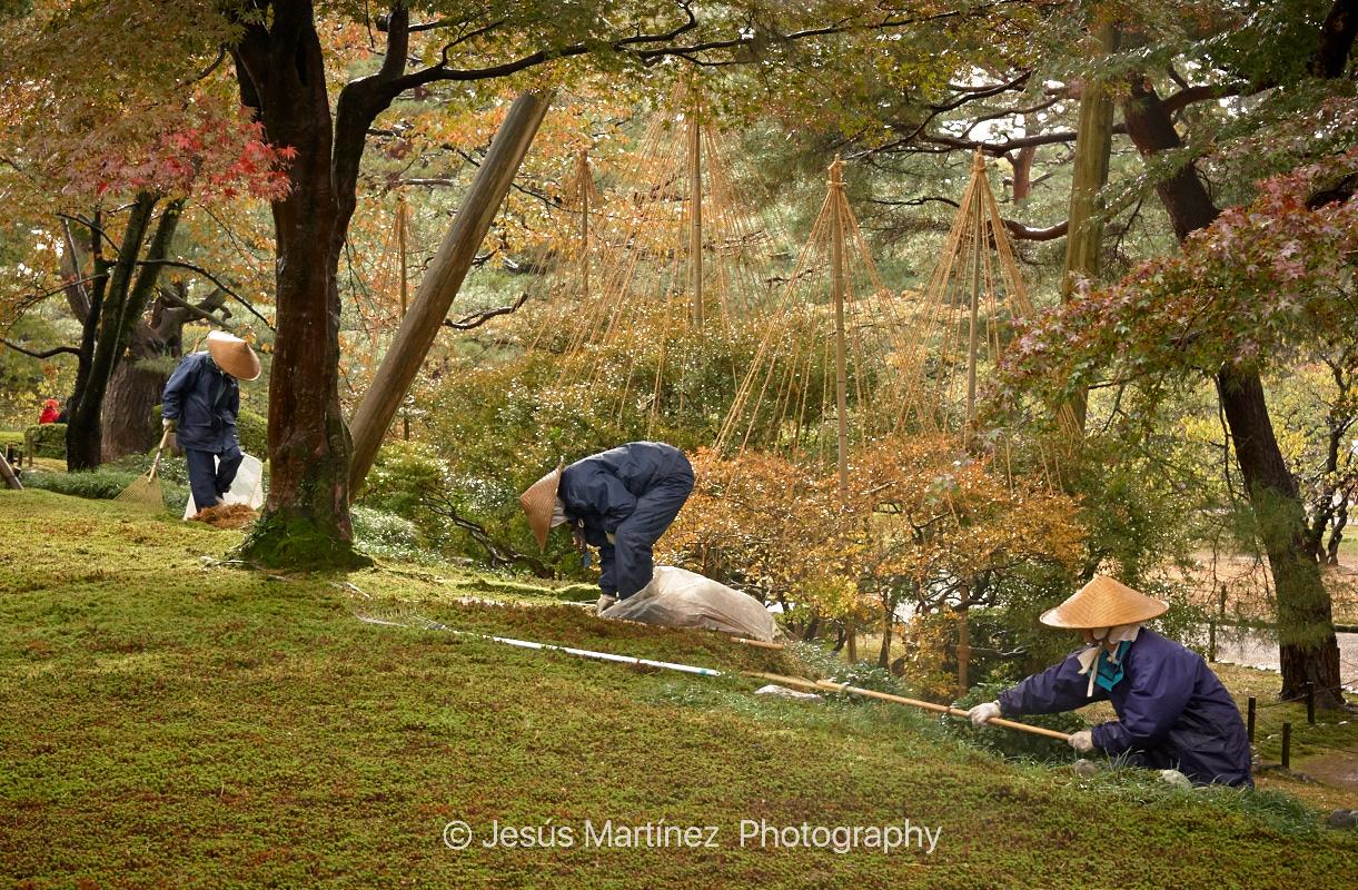 Jardín en Kanazawa. Verde