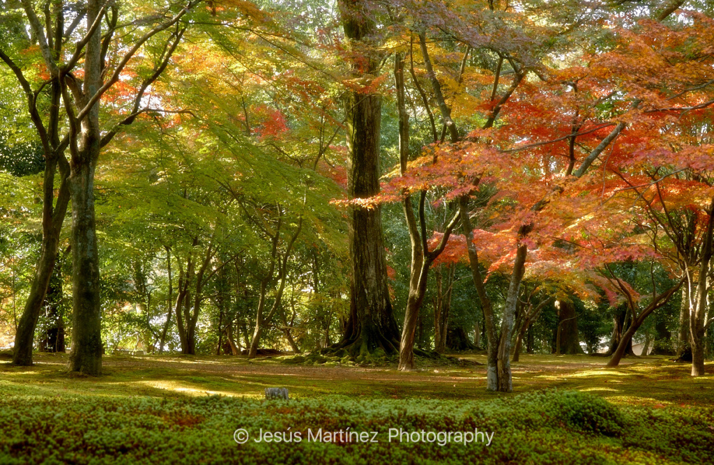 Jardín en Kyoto. Rojo, amarillo, verde