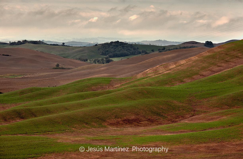 Campos de la Toscana